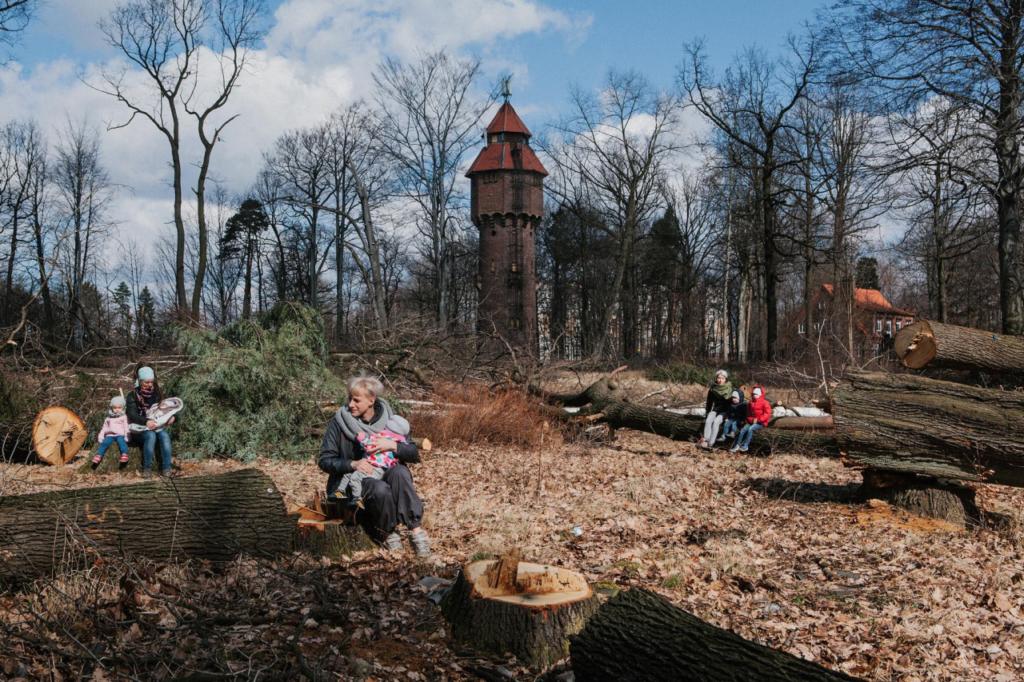Ogolnopolska akcja protestacyja - Matka Polka na wyrebie. Katowice - Giszowiec. Miejsce, w ktorym wlascicielka wyciela ponad 50 drzew (buk, dab szypulkowy, brzoza brodawkowata, sosna zwyczajna). Zdecydowana wiekszosc to starodrzew, najstarsze okazy mialy ponad 200 lat. Czesc drzew zostala wycieta zupelnie bezprawnie poniewaz drwale wkroczyli bezwiednie na dzialke miejska.