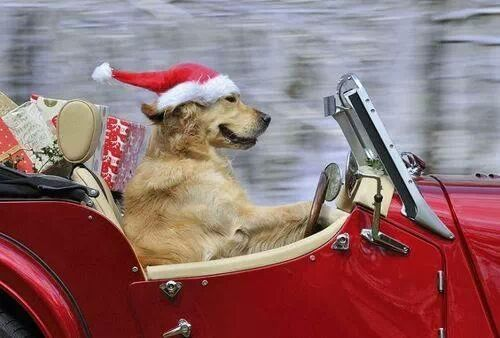 Natale a La Birba!