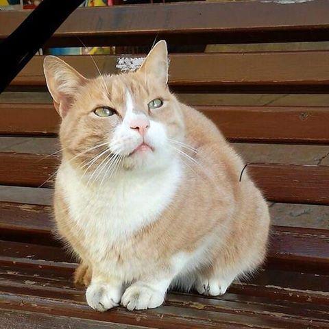 La favola di Re Gino, il gatto che ha cambiato un paese